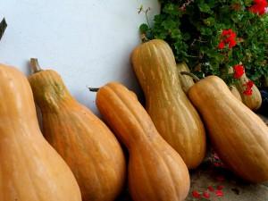 Pumpkins Tankovo