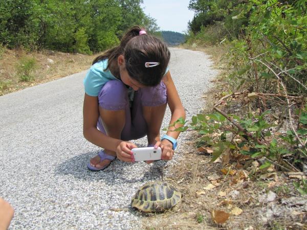 Изучаваме костенурките