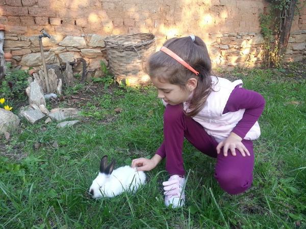 Зайче в Слънчевата ферма