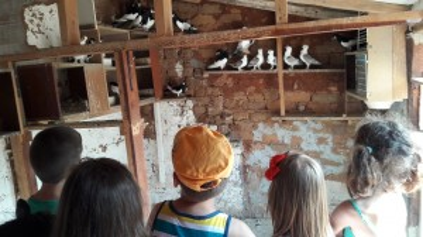 На гости у съседска ферма