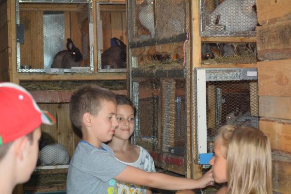 Хранене на зайчета